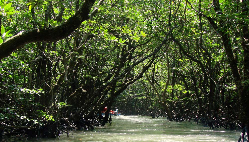 Mangrove Creek Safari