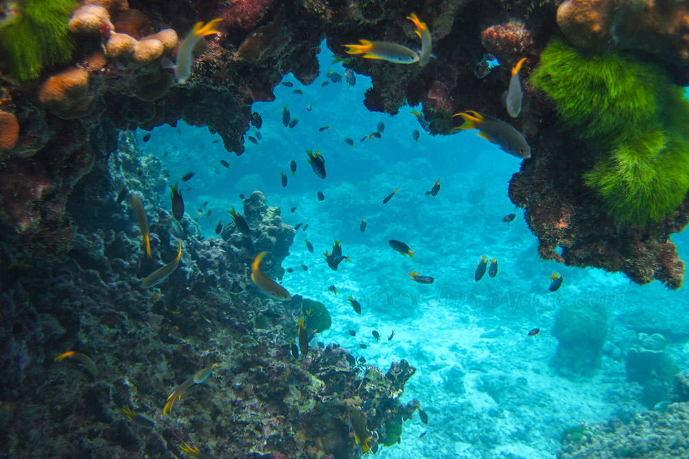 Underwater world of Andaman sea