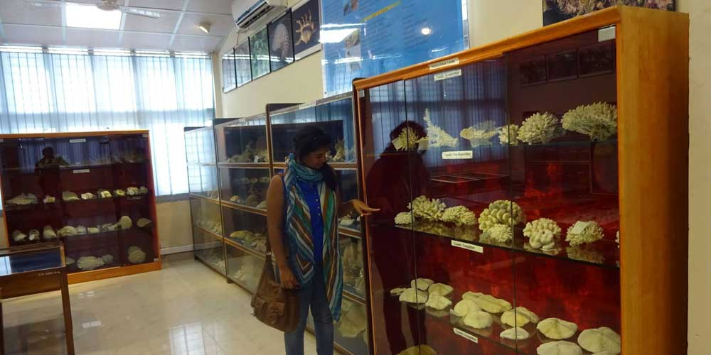 Zoological survey Museum in Port Blair